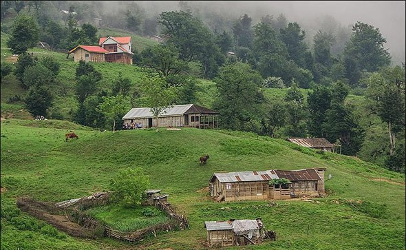Masal Forest, Gilan